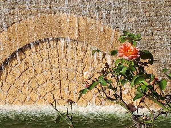 住吉公園の噴水と花